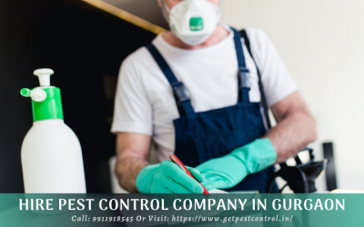 Hire Pest Control Company in Gurgaon