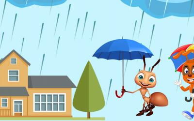 Pests That Come in Monsoon
