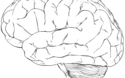 schematische tekening hersenen